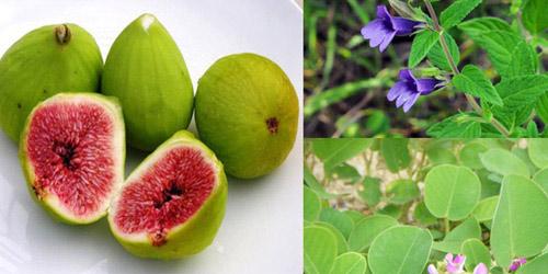 Bài thuốc trị bệnh sỏi mật, sỏi thận, sỏi gan hiệu quả - 2