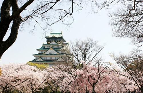 Nô nức mùa Lễ hội hoa anh đào Nhật Bản - 3