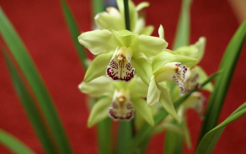 Choáng với 8 loài hoa đắt đỏ nhất hành tinh - 6