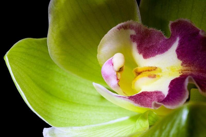Choáng với 8 loài hoa đắt đỏ nhất hành tinh - 5