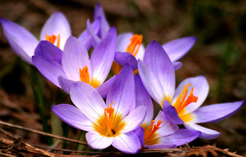 Choáng với 8 loài hoa đắt đỏ nhất hành tinh - 9