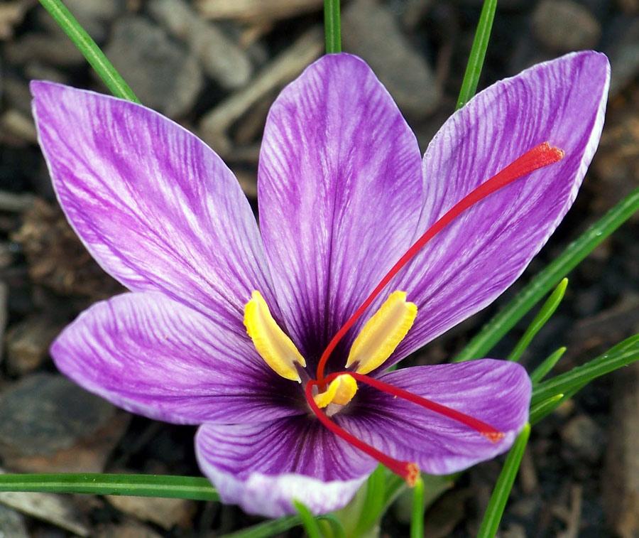 Choáng với 8 loài hoa đắt đỏ nhất hành tinh - 10