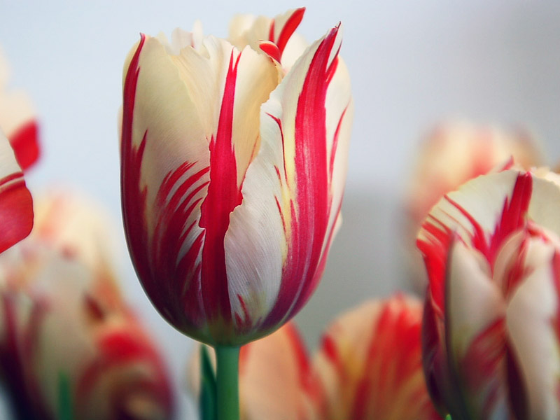 Choáng với 8 loài hoa đắt đỏ nhất hành tinh - 11