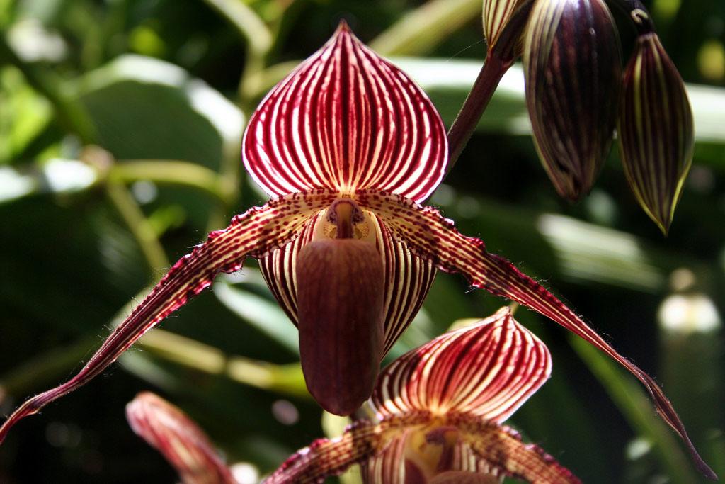 Choáng với 8 loài hoa đắt đỏ nhất hành tinh - 8