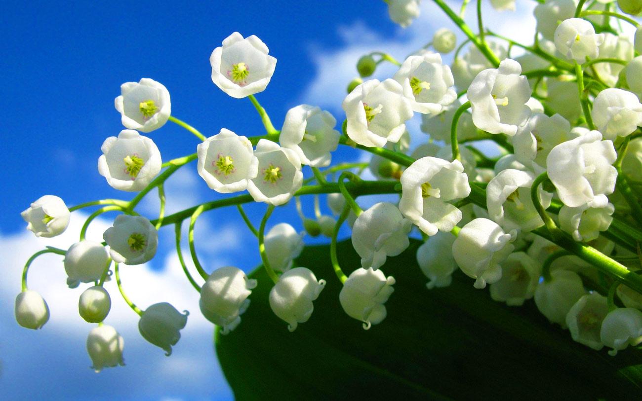 Choáng với 8 loài hoa đắt đỏ nhất hành tinh - 16