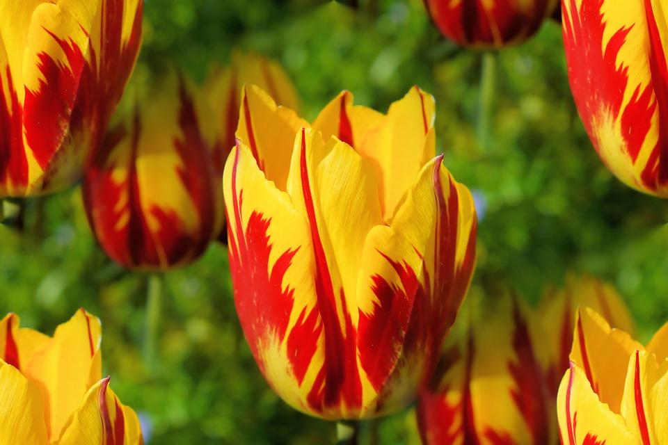 Choáng với 8 loài hoa đắt đỏ nhất hành tinh - 12