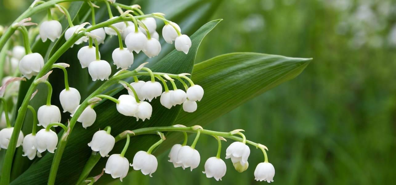 Choáng với 8 loài hoa đắt đỏ nhất hành tinh - 15