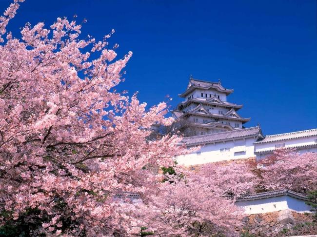 Khác biệt trong cách dạy con của người Nhật khiến cả thế giới ngưỡng mộ - 2