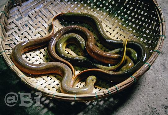 Cháo lươn lá gừng ấm bụng ngày lạnh - 2