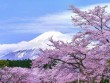 Nô nức mùa Lễ hội hoa anh đào Nhật Bản