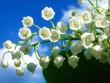 Choáng với 8 loài hoa đắt đỏ nhất hành tinh