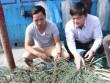"""Điều tra hiện tượng """"bùn lạ"""" như keo mắc lưới ngư dân Quảng Trị"""