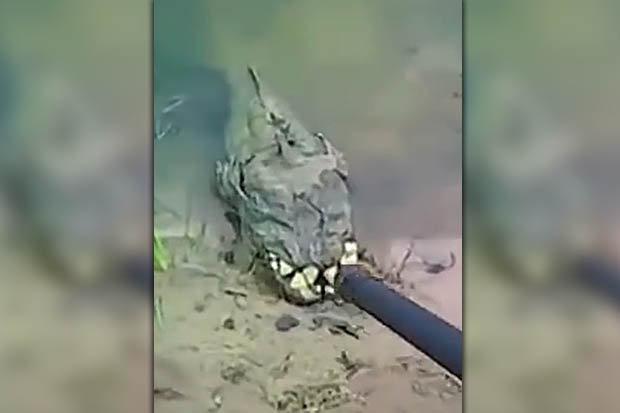 Video: Phát hiện sinh vật lạ có hàm răng đáng sợ ở Ukraine - 1