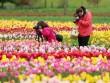Lễ hội hoa xuân lớn nhất Thế giới sắp khai mạc