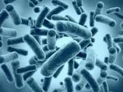 Vi khuẩn sống qua 50.000 năm tại hang động ở Mexico