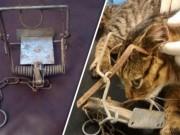 Phi thường - kỳ quặc - Mèo tò mò dính bẫy chuột, nguy cơ chấn thương não