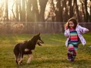 Nuôi một chú chó rất tốt cho sức khỏe của bạn