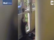 Phi thường - kỳ quặc - Mèo đứng 2 chân, mở cửa như người để chuồn đi chơi