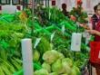 TP HCM: Phát triển nông nghiệp đô thị hiện đại
