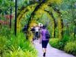 Lạc giữa vườn lan đẹp chưa từng thấy ở quốc đảo Singapore
