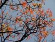 Bù Gia Mập đẹp mê hồn mùa cây thay lá