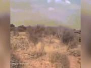 Phó thủ tướng Ả Rập đăng video săn sư tử đực hung hãn