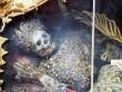 Bộ xương nạm ngọc lấp lánh trong tu viện 700 năm ở Đức