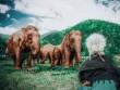 """Quên resort xa hoa đi, đến Thái Lan chăn voi mới là """"chất"""""""