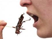 Lợi ích không ngờ của việc ăn côn trùng