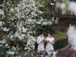Bần thần trước mùa hoa đẹp đến nao lòng ở Trung Quốc