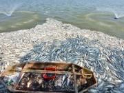 Tin tức trong ngày - Hà Nội tạm dừng nuôi cá ở hồ Tây