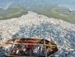 Hà Nội tạm dừng nuôi cá ở hồ Tây