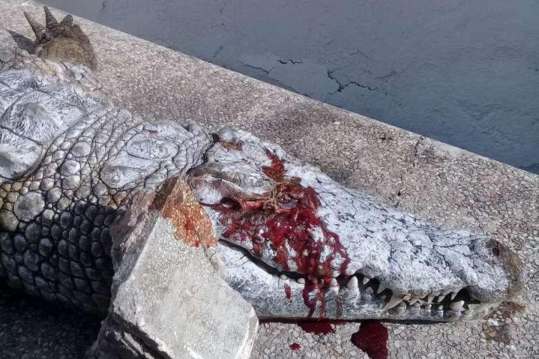 """Cá sấu Tunisia bị du khách ném đá """"vỡ đầu"""" đến chết - 1"""