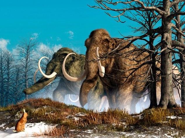 Tiết lộ lý do thực sự khiến loài voi ma mút tuyệt chủng - 1