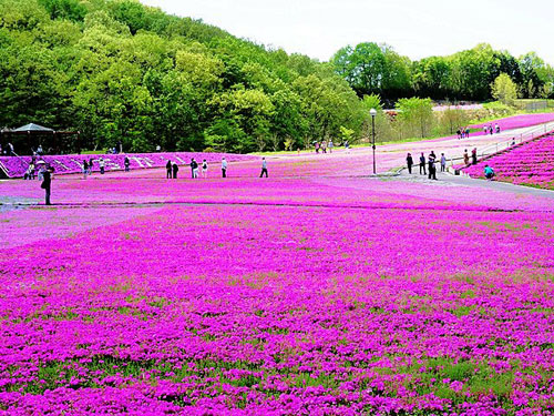 Khám phá TOCHIGI –NHẬT BẢN TOUR  cùng Sông Hàn Tourist - 1