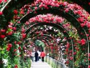 Bạn trẻ - Cuộc sống - Sốc vì những bức ảnh thực tế tại lễ hội hoa hồng