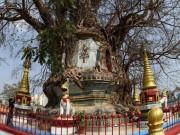 Du lịch - Bí ẩn trong ngôi chùa lạ nằm dưới gốc đa cổ thụ ở TQ