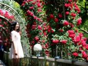 Tin tức trong ngày - Lễ hội bày hoa hồng giả, Hà Nội yêu cầu báo cáo