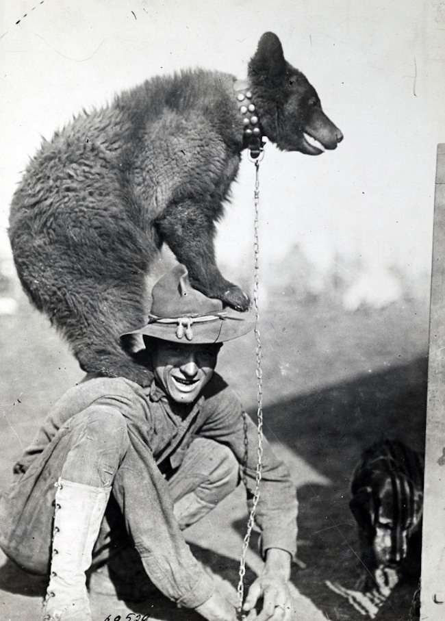 """Những con vật có """"vai vế"""" trong quân đội Mỹ Thế chiến I - 4"""
