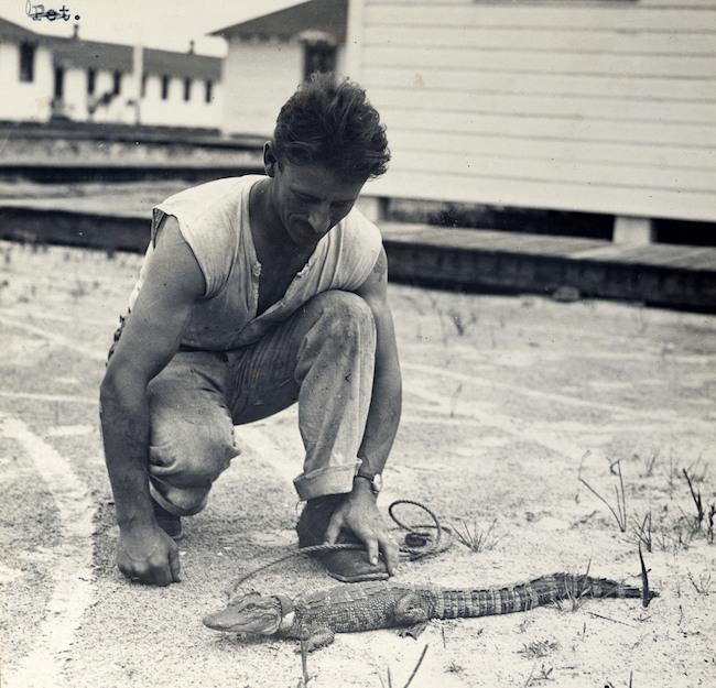 """Những con vật có """"vai vế"""" trong quân đội Mỹ Thế chiến I - 9"""