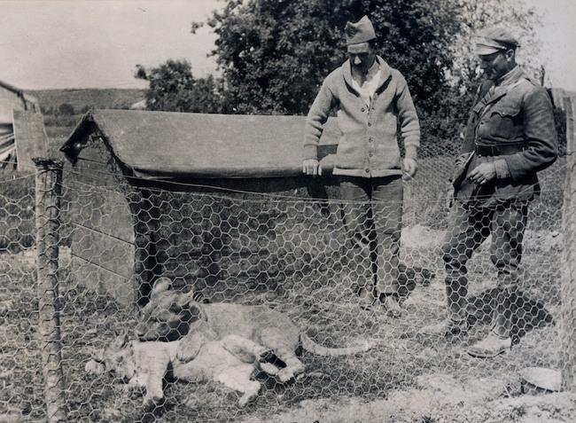 """Những con vật có """"vai vế"""" trong quân đội Mỹ Thế chiến I - 8"""