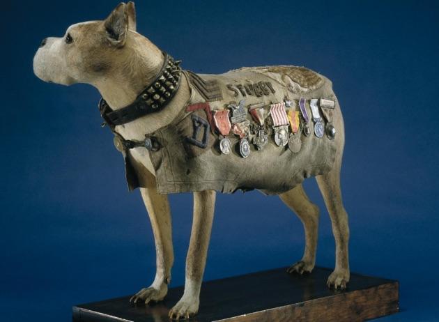 """Những con vật có """"vai vế"""" trong quân đội Mỹ Thế chiến I - 6"""