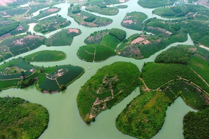 """""""Ốc đảo"""" chè xanh đẹp mê hồn giữa miền Tây xứ Nghệ - 1"""