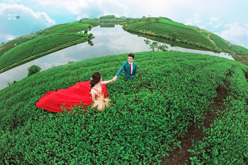 """""""Ốc đảo"""" chè xanh đẹp mê hồn giữa miền Tây xứ Nghệ - 6"""