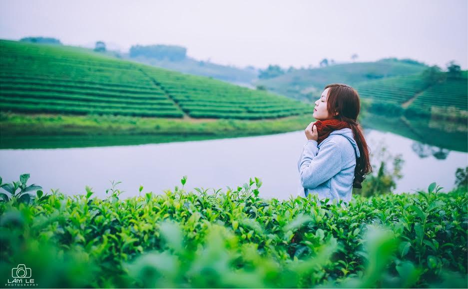 """""""Ốc đảo"""" chè xanh đẹp mê hồn giữa miền Tây xứ Nghệ - 7"""