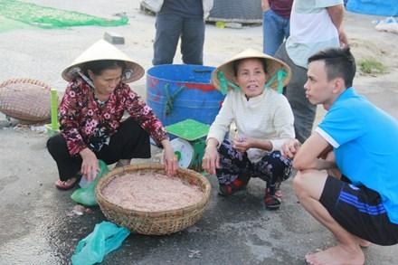 Ngư dân Đà Nẵng kiếm bạc triệu mỗi ngày từ ruốc - 1