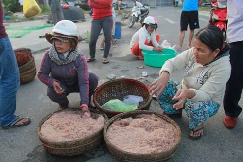Ngư dân Đà Nẵng kiếm bạc triệu mỗi ngày từ ruốc - 2