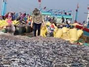 Thị trường - Tiêu dùng - Được mùa cá nục, ngư dân không vui
