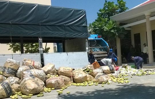 Tiêu hủy ngay 66 tấn xoài nhập lậu từ Campuchia - 1