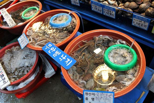 Liệu bạn có dám vượt qua nỗi sợ hãi để ăn bạch tuộc sống? - 2
